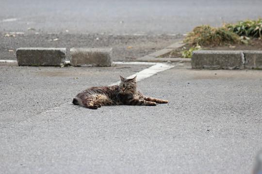 鷲宮神社の猫の日向ぼっこ