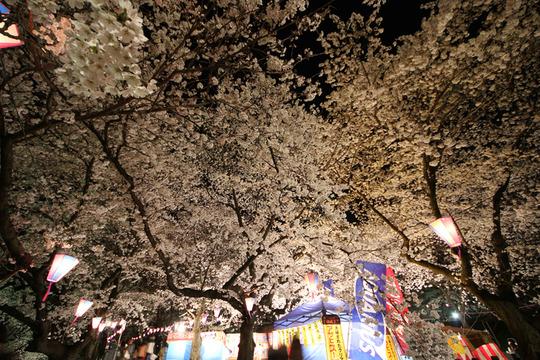 幸手権現堂の夜桜2014-02