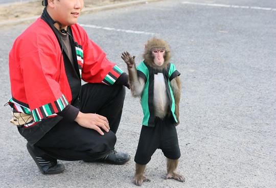 猿回しの最後に挨拶するお猿さん2014年1月3日