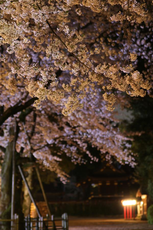 鷲宮の桜20160405-2