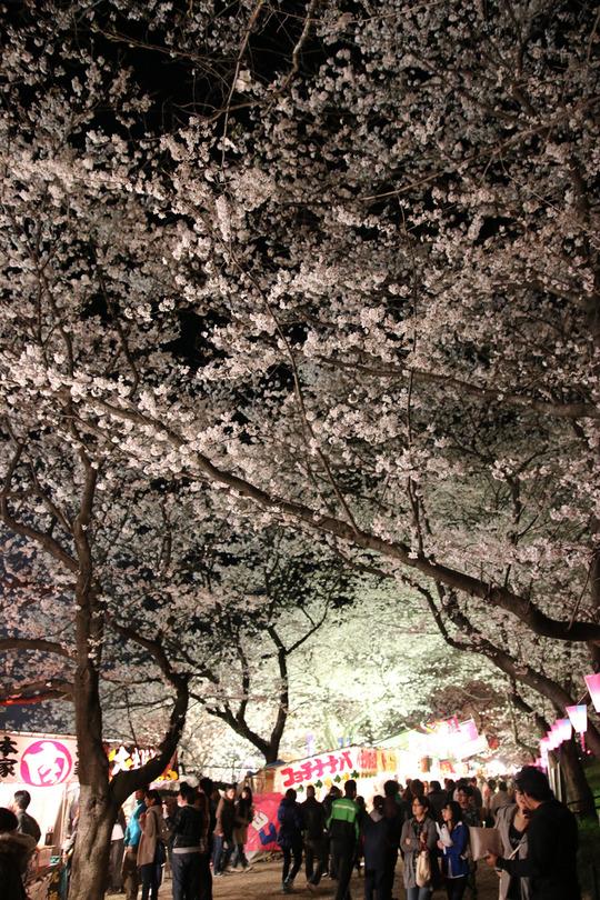 幸手権現堂の夜桜2014-05
