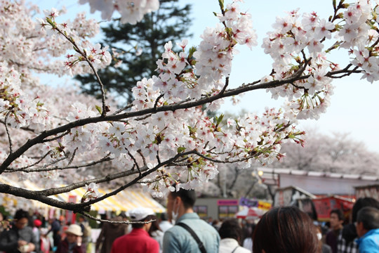 幸手権現堂の桜と花見客 4月1日