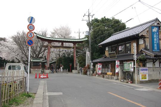 桜の咲く鷲宮神社鳥居前