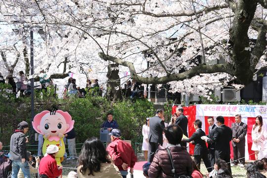 幸手権現堂の桜2014-08