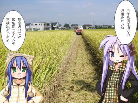 鷲宮の稲刈り