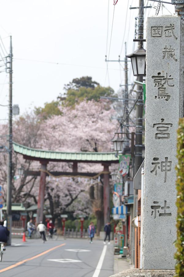 鷲宮の桜20160403-1