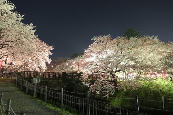 幸手権現堂 夜桜20150331-2