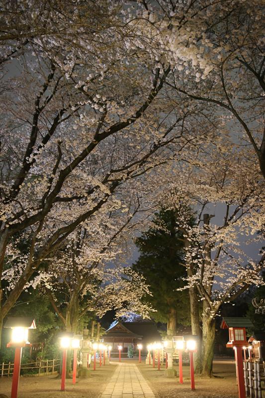 鷲宮神社の夜桜2-20140331