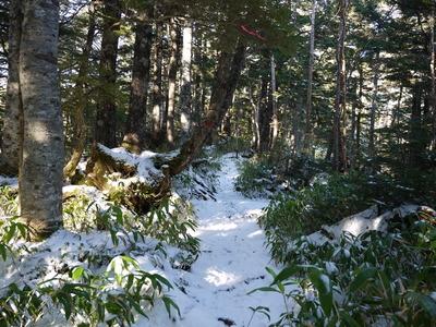 樹林帯登山道