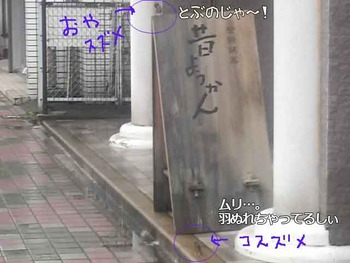 oyakosuzume