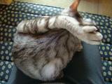 アンジェリカさんの猫