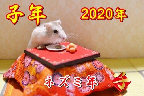 ano-rato (2)