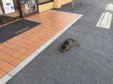 コンビニ猫