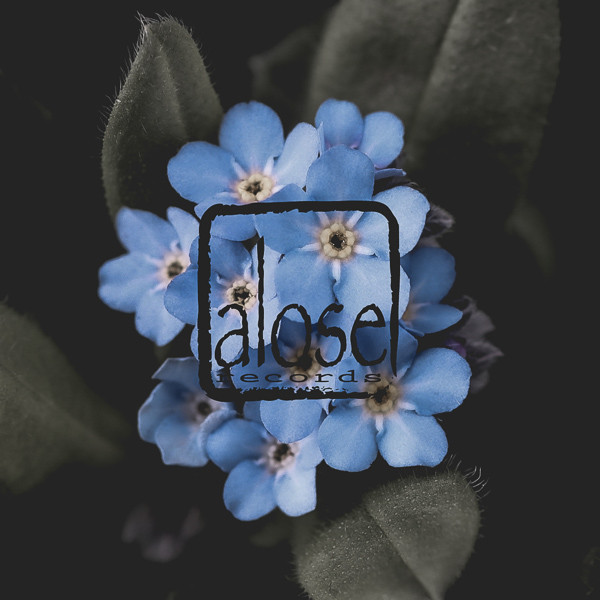 alose2
