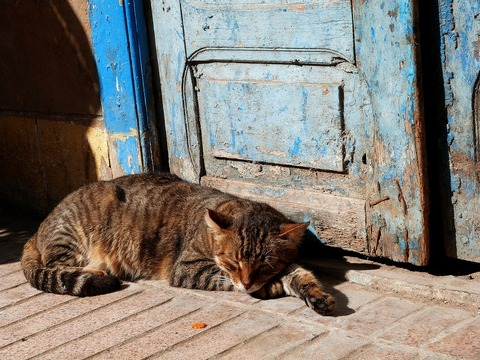 cat-1865263_1280