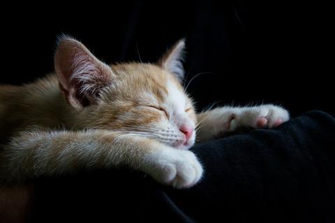 cat-1056661_1280