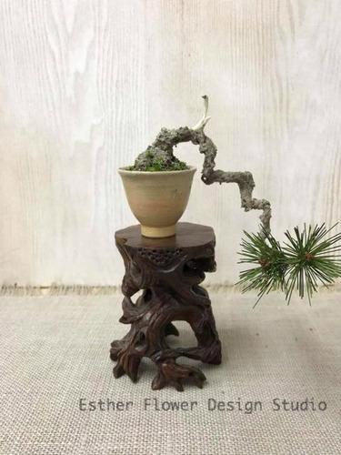 Craft Bonsai