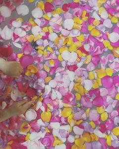 熊田曜子、誕生日にもらった花を湯船に「良いアイデア」「セレブ」