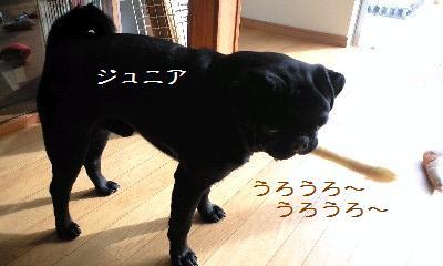 21411f43.jpg