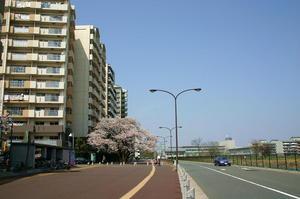 東山道武蔵路と桜-1