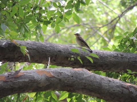 木にとまった小鳥