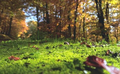 緑にあふれた森