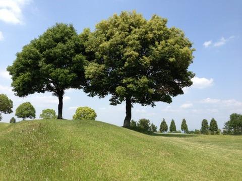ゴルフ場の樹