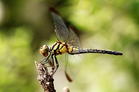dragonfly-1193028_640