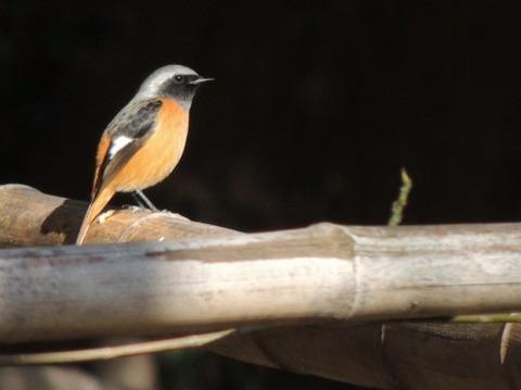 木に止まった小鳥