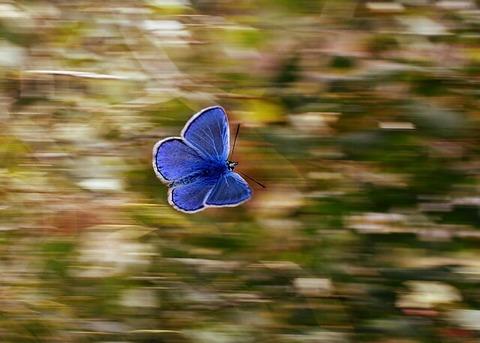 butterfly-2837589_640