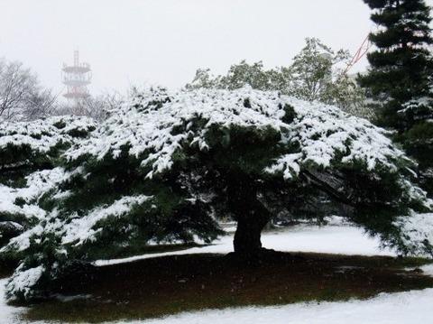 雪のなかの松