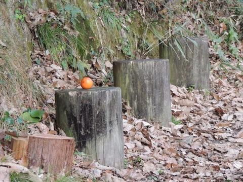 柿と切り株