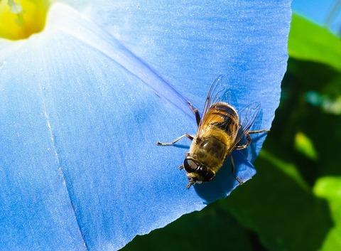 花にとまるハチ