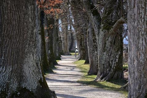 木々に囲まれた道