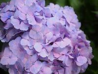 花②201906