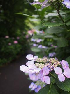 花①201906