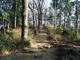 稲荷山コースの木道