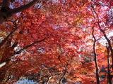 高尾山口駅前の紅葉