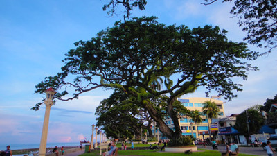 blog-image-dumaguete-rizal-street-tree