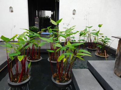 blog-image-Chiangmai-massage