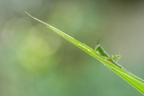 grasshopper-1129236_1280