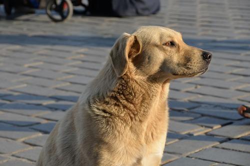 dog-1466054_1280
