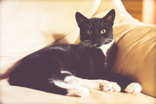 cat-1466614_1280