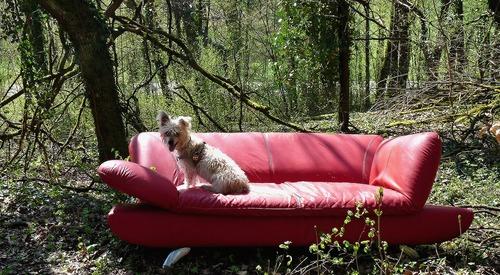 red-sofa-1320901_1280
