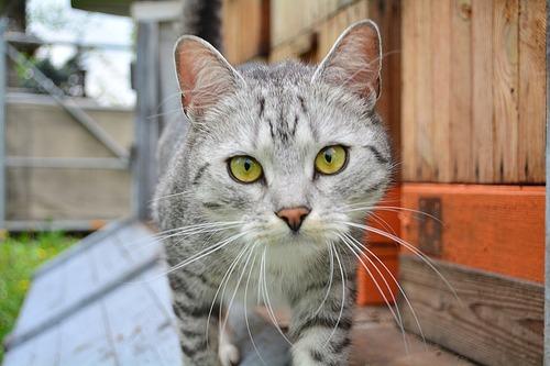cat-2298137_1280
