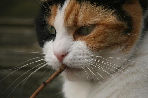 cat-717193_1280