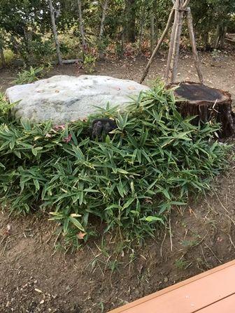 庭:草むしりあと