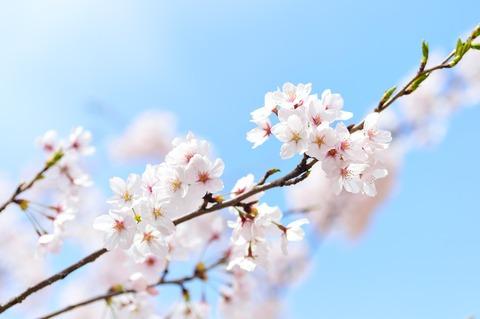 spring-2218771_1920 (1)