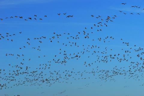 birds-4002377_1920 (1)