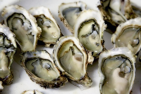 oyster-1522835_1280 (1)